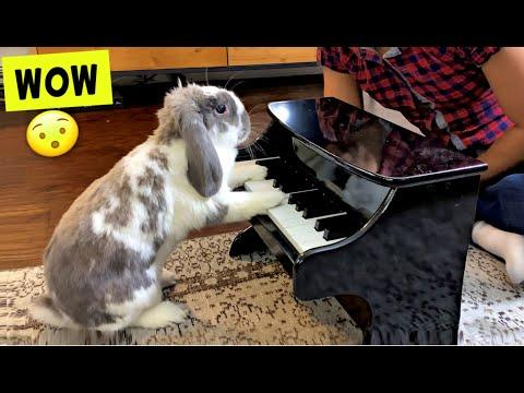 I taught my Rabbit Piano Video!