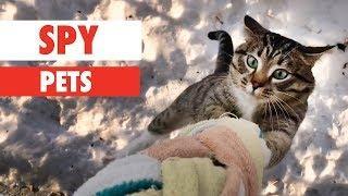 Spy Pets