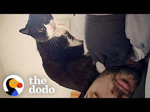 Stray Cat Waits At Guy's Window Until He's Adopted #Video