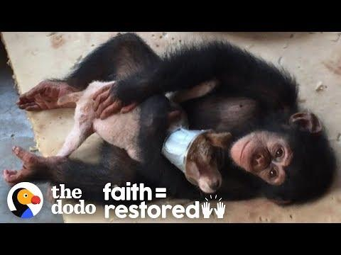 Sick Street Puppy Recovers with Help from Chimpanzees | The Dodo Faith = Restored