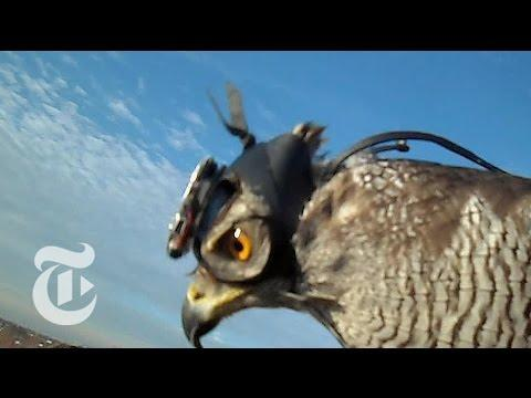 Hawk Cam Captures The Hunt