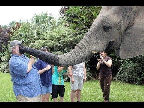 Elephants Playing with Humans Compilation