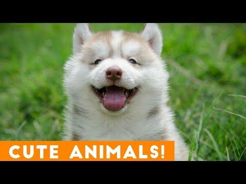 Cutest Pets & Animals of the Week Compilation November 2018