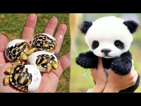 Cutest baby animals Videos Compilation Cute moment of the Animals - Cutest Animals #21