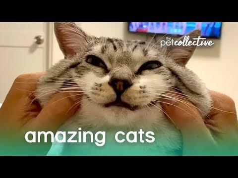 Super Amazing Cats | The Pet Collective