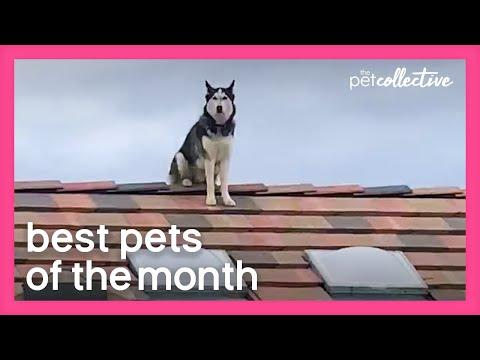 Best Pets of the Month Video (July 2020)