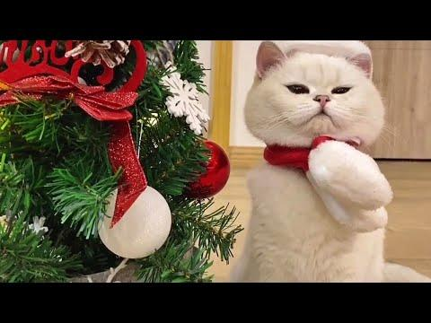Cute Kitty Getting Into the Holiday Spirit Video