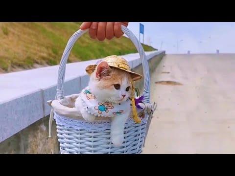 Gorgeous Basket Kitty Video