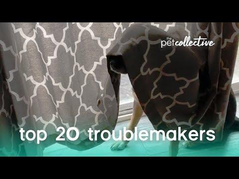Best Pets of the Year: Top 20 Troublemakers | The Pet Collective