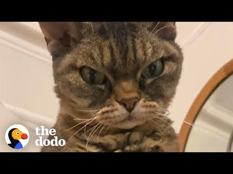 Grumpy, Un-adoptable Cat Is Her New Mom's Shadow #Video