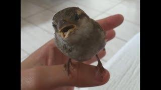 What Happens When You Sing To A Bird