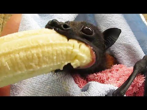 He Tried to Eat it All at Once. Your Daily Dose Of Internet. #Video