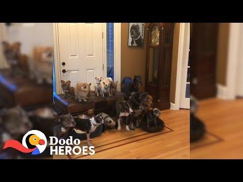 Couple Keeps Rescuing Senior Dogs Everyone Else Gave Up On