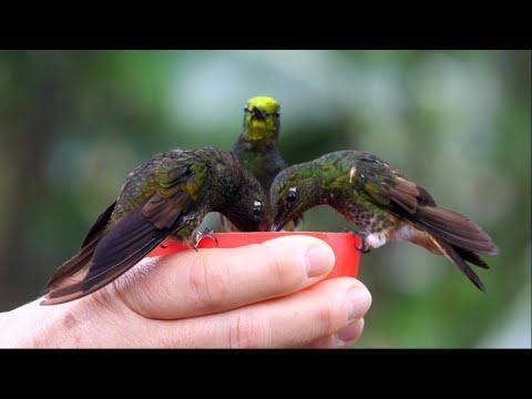 Hand feeding Hummingbirds.