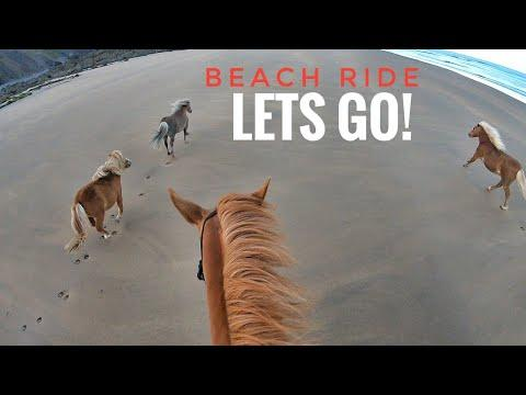 Beach Ride with only GINGER Horses and matchy Dog! Emma Massingale