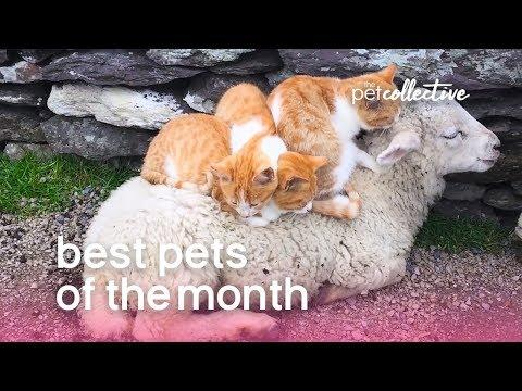 Best Pets of the Month | December 2019