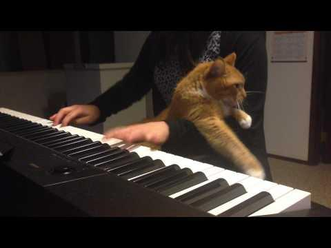 Cat Sabotages Girl's Piano Playing!