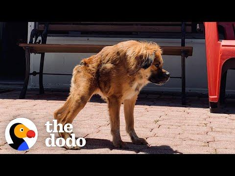 Only A Few Dogs Look Like Her In The World, But She Has No Idea She's Different #Video