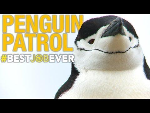 Tagging Adorable, Nasty Little Penguins #bestjobever
