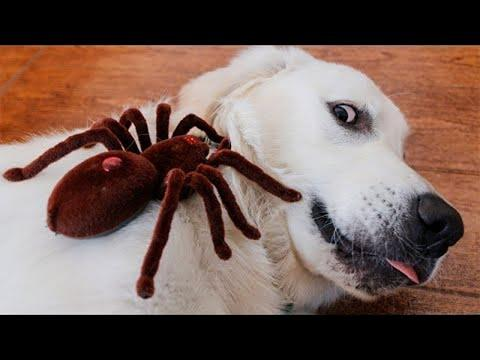 Relaxing Time With Funny Pet Videos - Smart and Funny Pets Compilation