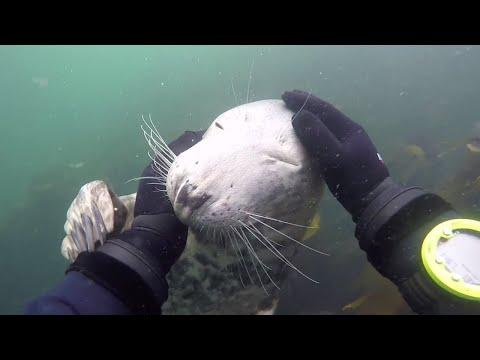 Friendly Seal Wants To Be Pet. Your Daily Dose Of Internet