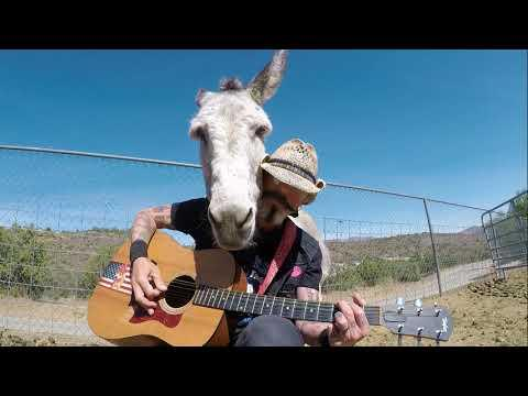 Hazel the Donkey's Sweet Home Video