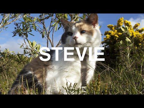 Meet Stevie The Blind Mountain Climbing Cat!