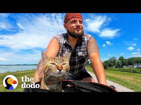 Guy Finds A Stray Kitten, Bikes Around The World With Her For Two Years #Video