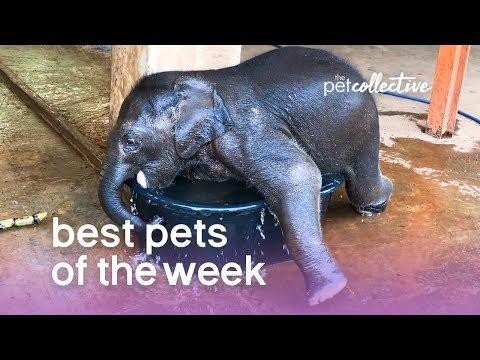 Best Pets of the Week - BABY ELEPHANT BATH