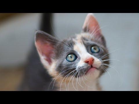 Rescued Kitten Has Eyes Like Galaxies Video