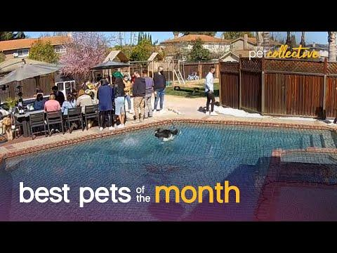 Best Pets of the Month (April 2021 Video)