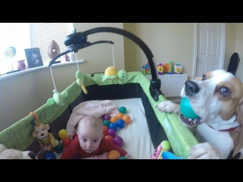 Charlie The Beagle Has Big Surprise For Baby Laura!