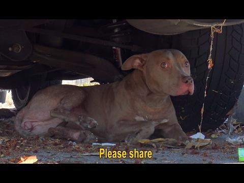 Stray Dog Gets Hit By A Car. Luckily, Someone Called Hope For Paws To Help.