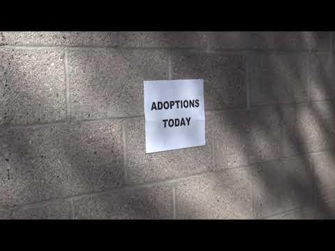 Happy Holidays Dog Adoptions
