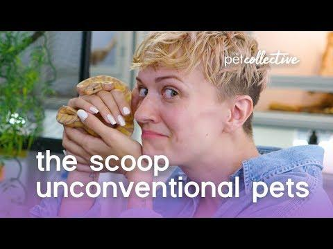 Unconventional Pets | THE SCOOP | The Pet Collective