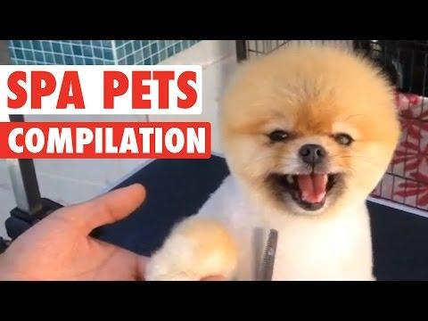 Crazy Spa Pets || Compilation