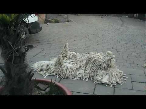 Mop Dog