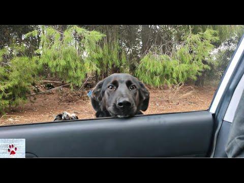 A loyal dog #video