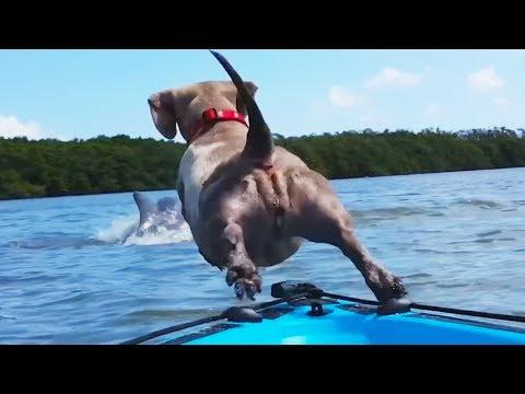 Funny Animals fresh fails December 2018