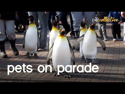 Pets and Animals On Parade Video