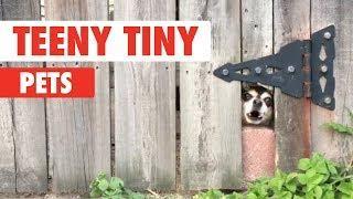 Teeny Tiny Pets