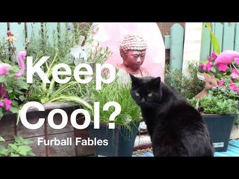 How to be a Cool Cat When it's Hot Video