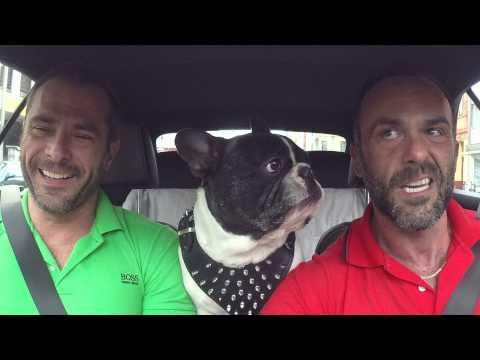 Junior The French Bulldog - Let's Talk About...