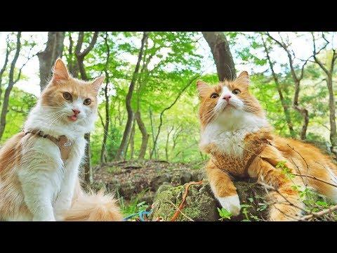 Taking my cats for a walk - JunsKitchen