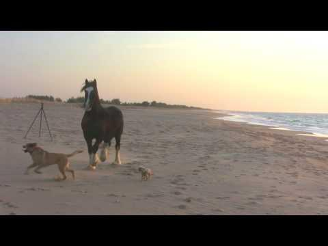 Man, Horse And 3 Dogs - A Day At The Beach!