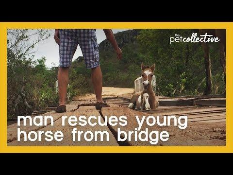 Man Rescues Young Horse From Bridge Video