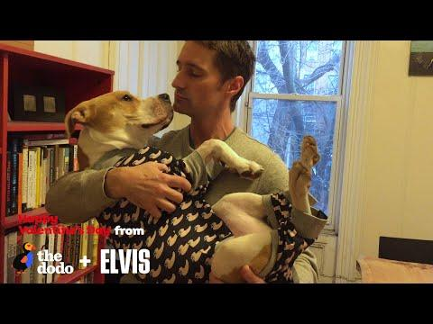 What Happens When You Meet Your Rescue Dog | The Dodo