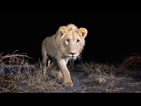 Hidden Camera-trap Captures Rare Pictures Of Elusive African Animals