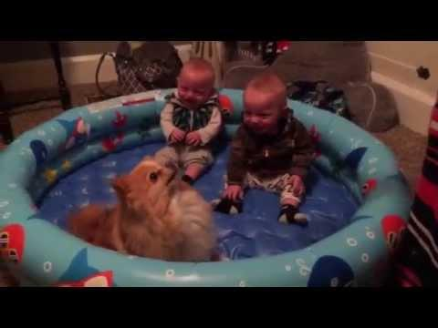 Pomeranian Puppy Makes Twin Babies Laugh