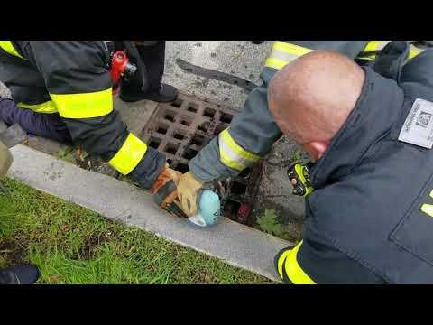 Firefighters Rescue Raccoon from Sewer Grate!